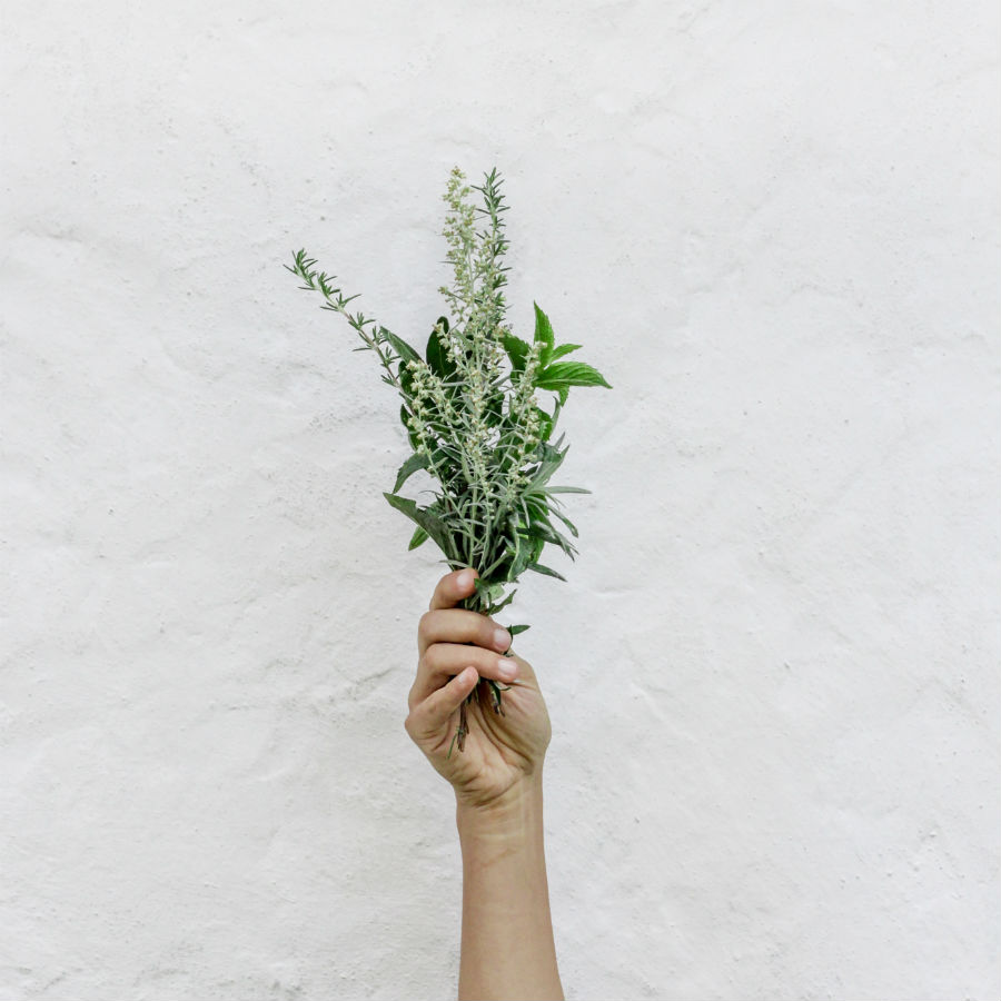 herbs for anxiety hand holding plants