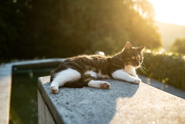 how to sleep better cat outside in sunlight